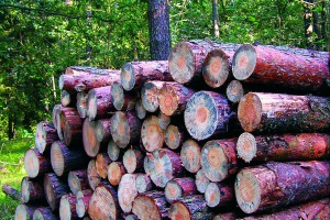 Inwestycja Swedwoodu w nowy zakład