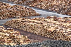 Plany inwestycyjne branży drzewnej i meblowej