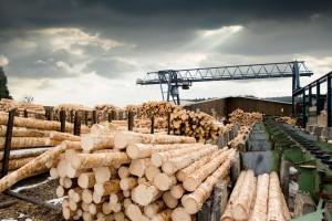 Naukowo o drewnie i meblarstwie