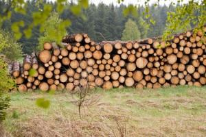 Porozmawiajmy o drewnie – zapraszamy na Europejski Kongres Gospodarczy