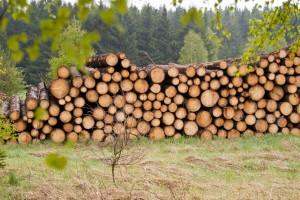 Pionierski projekt wspierania firm z sektora drzewnego