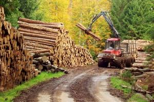 Dyskusje o bezpieczeństwie w branży drzewnej