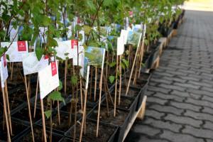 Tysiąc drzew na 25. urodziny przedsiębiorstwa