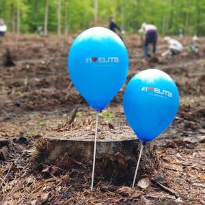 Pracownicy firmy Elita posadzili kilka tysięcy sadzonek dębu